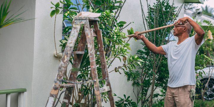 Tips om je tuin te renoveren